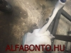 Alfa Romeo 159 ablakmósó tartály